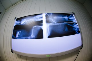 Негатоскоп с возможностью просмотра нескольких снимков