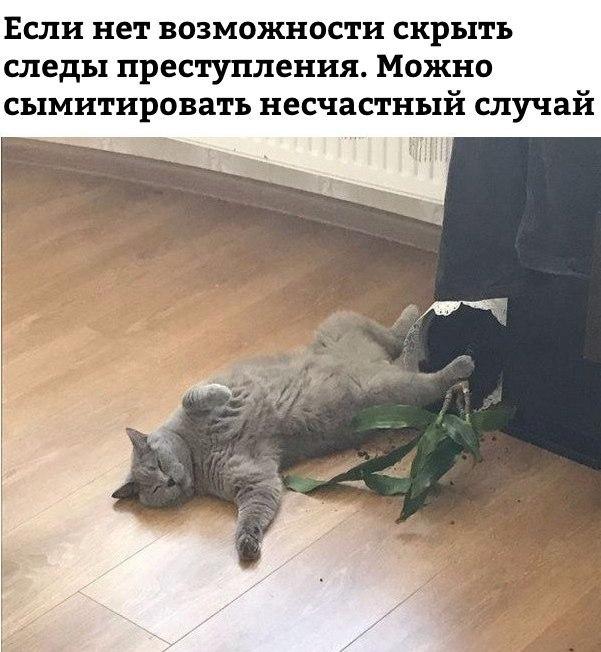 Fkp0r_v1zlI.jpg