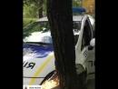 Дерево перебегало через дорогу.