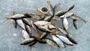 Снасть коромысло для зимней рыбалки.