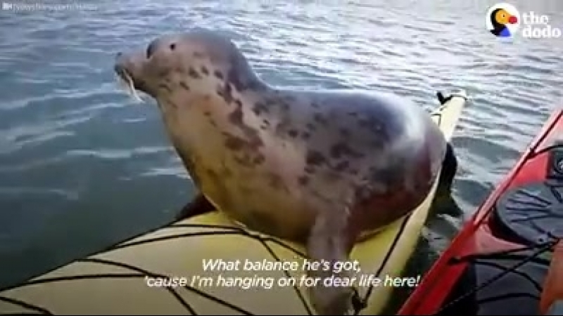 Морской котик-каякер