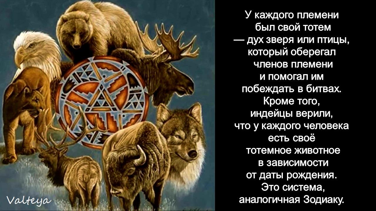 зодиак - Гороскоп американских индейцев. Тотемные животные по Знаку Зодиака. Астрология. WbIscUt15ss