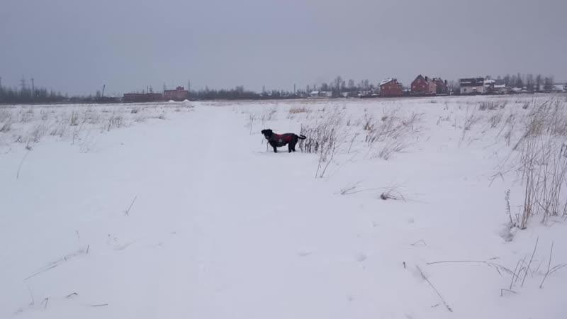 Зимой на поле красота - нет никого и слег чистый!
