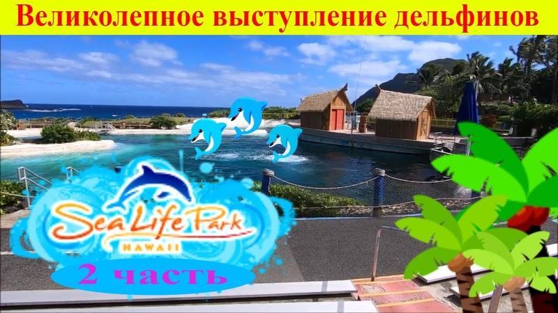 Великолепное выступление дельфинов. Путешествие в Морской мир - Sea Life Park. Hawaii Oahu (2 часть)