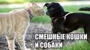 🔴Смешные кошки и собаки . Новые приколы с котами
