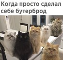 Анастасия Ляпунова фото #28