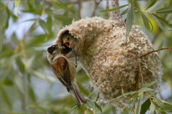Құрқылтайдың ұясы 80 түрлі ауруға ем екен      Қазір көпшіл