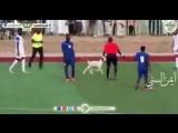В Судане на поле выбежал козёл