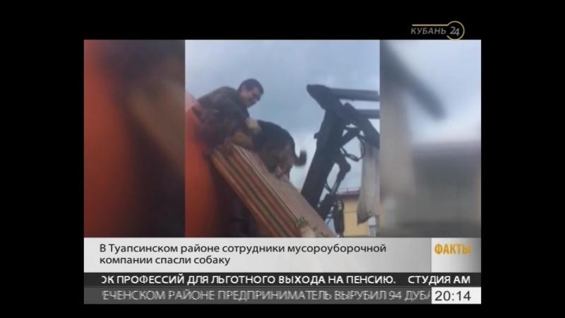 Спасение собаки в Новомихайловском