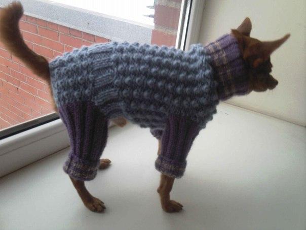 Вяжем одежду для собак видео