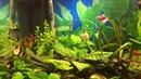 Барбусы тернеции меченосцы скалярии и др в аквариуме на 100 литров ч 1