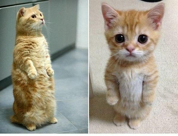 Стоячие коты