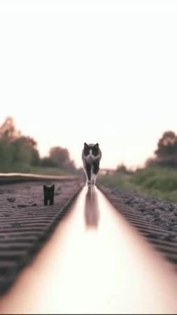 Railway nightcat · coub, коуб
