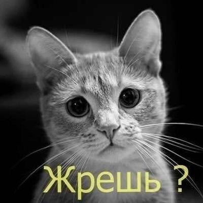 Лера Савич, 10 июня 1999, Бобруйск, id199096136