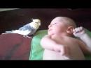 Попугай поет для малыша