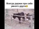 Умный Осел!)