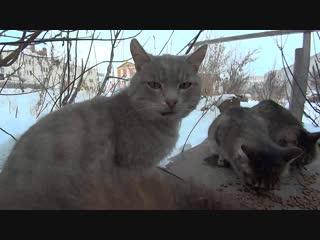 незавидная судьба брошенных и голодных котиков hungry stray cats