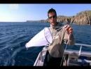 Необычные животные Ника Бейкера _ Китовая акула