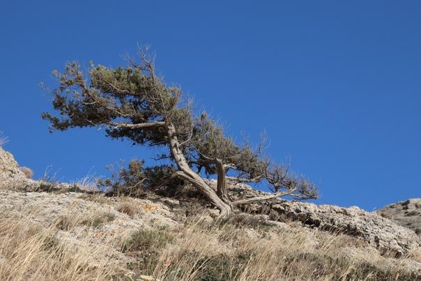 Очень красивые деревья в Крыму. Обалденно.