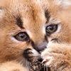 Zoopicture - В мире животных