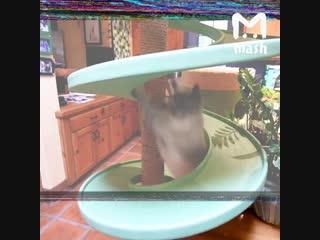 Американец превратил свой дом в игровую площадку для кошек
