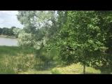 2018.06.12 Несвиж, Минская обл - Несвижский замок, Старый парк, Дикий пруд