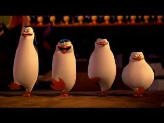 Пингвины Мадагаскара 3D (мультфильм, комедия, приключения, семейный) - с 27 ноября 0+