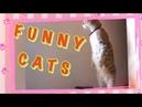 Funny cats. Приколы с животными. Смешные кошки.