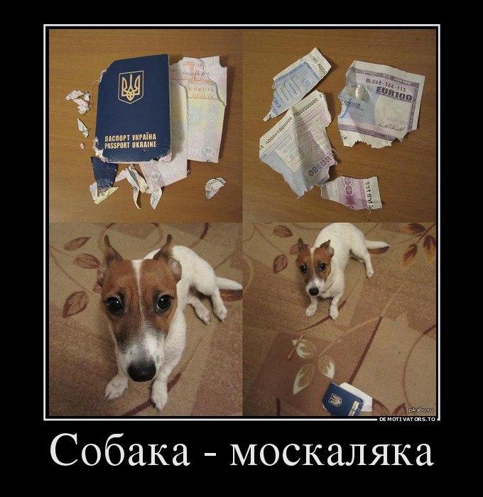 http://cs543103.vk.me/v543103907/11ade/ppNMiiLZkhc.jpg