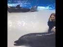 Играют с дельфинами