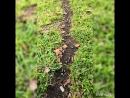 Муравьиная тропа