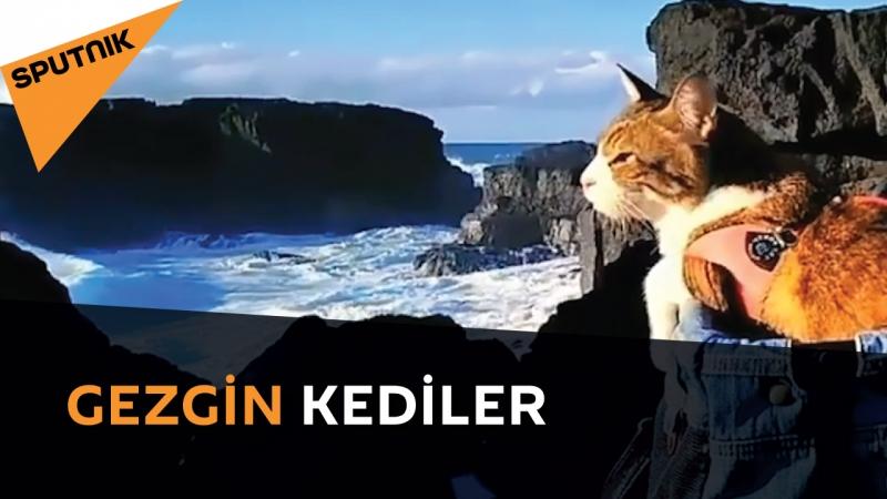 Bu kediler hepimizden daha fazla seyahat ediyor