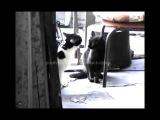 драка котов cats fight
