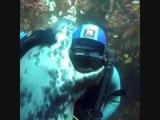 Морские котики любят обнимашки