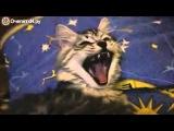 Реакция кота на муху. Такой смешной)