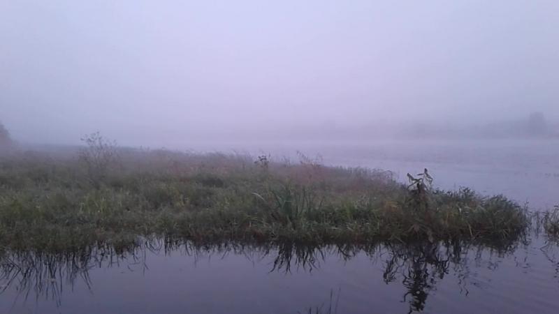 Река Сясь, Ленинградская область, (впадает в Ладогу)