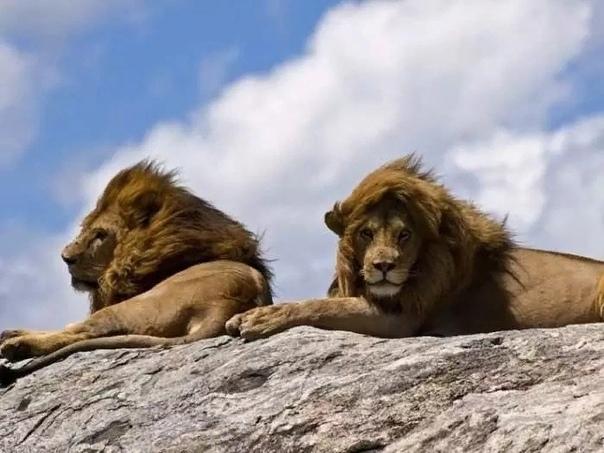 Самые опасные животные Африки для человека Африка место одновременно прекрасное и смертельно опасное. Это дом для бесчисленного количества животных, многие из которых прирожденные убийцы.