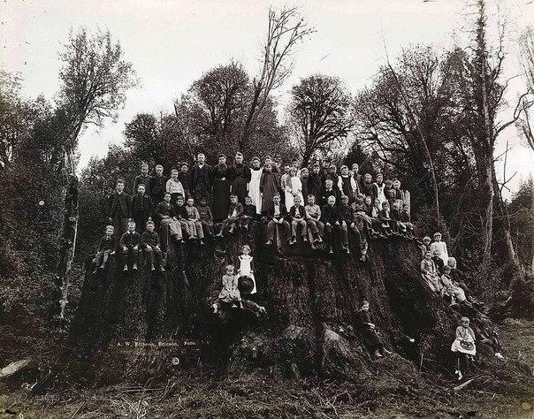 Самым большим деревом во всем мире могла быть сейчас Гигантская секвойя в Филдбруке