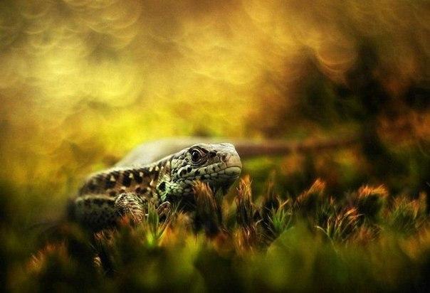 Супер картинки природы в блогах
