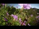 National Geographic Дикий запад Ровно в полдень 2012 3 серия из 3 HD 720