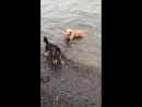 My dog loves to swim. My girlfriends dog hates to swim. This is what play dates look like... t.co/2zq0QAJRse