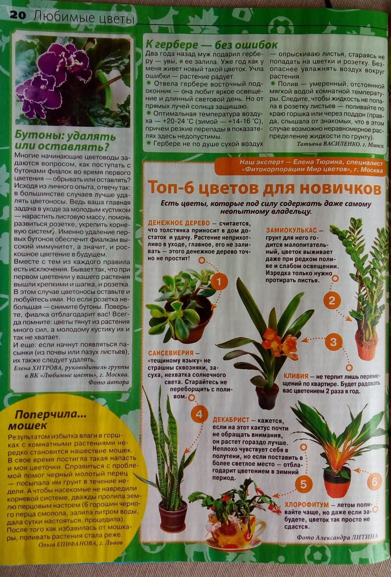 статьи о растениях из  газет и журналов - Страница 8 VRwGkfWy-8w
