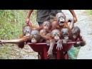 Смешные обезьяны Приколы про обезьян Funny monkeys 1 Макаки ржака до слез