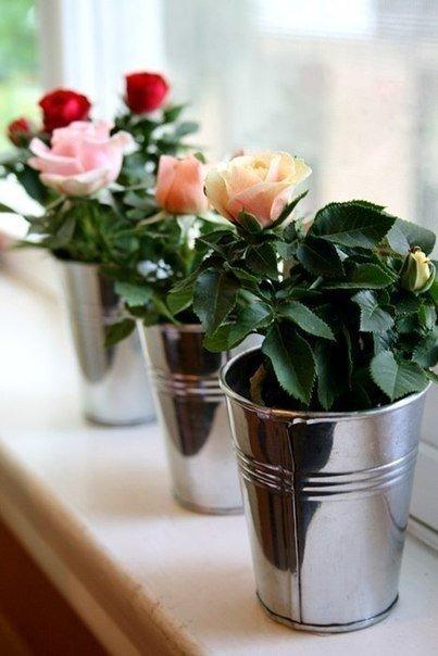 Как укоренить розы из подаренного букета