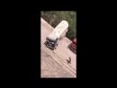 Самый смелый водитель грузовика в мире?!