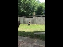 Забор не может помешать этому маленькому мальчику играть со своим новым лучшим другом