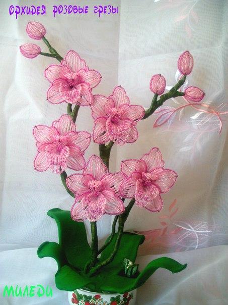 одного цветка к орхидее
