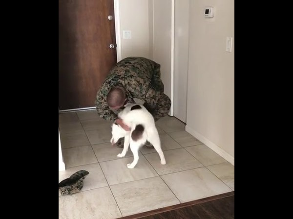 Luna was excited to say the least to see her papa after a 7 month deployment! - 989360