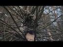 Человек с винтовкой на дереве