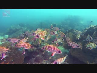 Squirrelfish at Blueberry Hill   Diving Koh Chang, Thailand